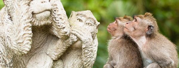 8ubud-monkey-forest-bali