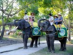 Elephant-Ride-at-Bali-Safari-and-Marine-Park