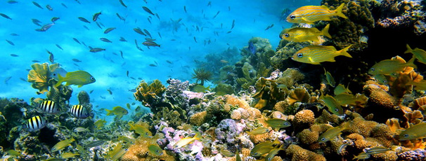 bali-underwater-activities