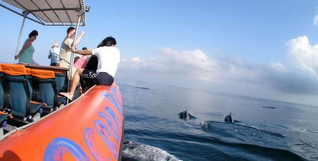balisuta-dolphins_view-16