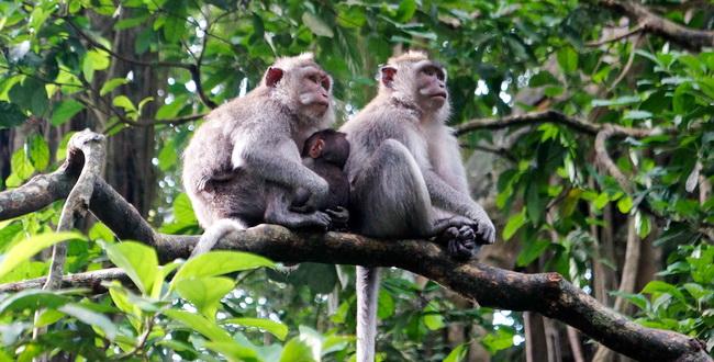 Ubud-Monkey-Forest-5